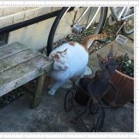 カイロ入りの外猫用ベッド