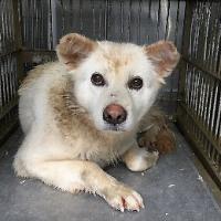 福井県内保護・収容犬