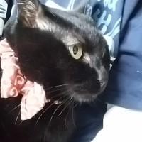 抱っこの妹猫でオヤスミ