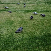 aves 497
