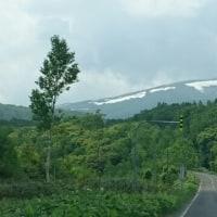 雪渓と新緑