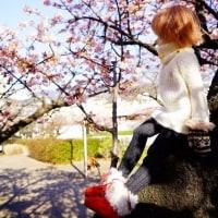 大野屋の前の熱海桜