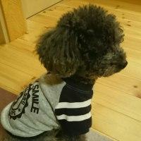 愛犬の洋服を新調しました。