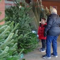 イギリスの師走の風物詩、クリスマス・ツリー売り、本物の木!
