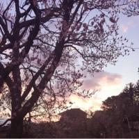 取材と夕刻の梅