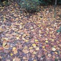 枯葉・秋の歌