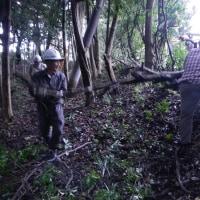 上野の森の手入れ