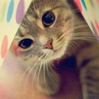 洞窟のネコ