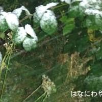 昨日の2016初雪!続き