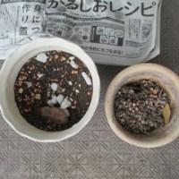 サボテン植え替え(2)