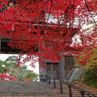 晩秋の千秋公園
