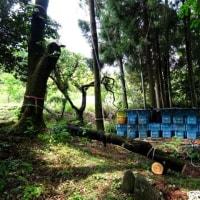ここは厳島神社