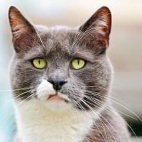 NYど真ん中で猫から鳥インフル感染した件が騒動に