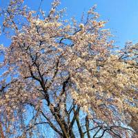 春発見…。