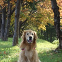 秋晴れの散歩