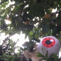 柿の話・映画の話