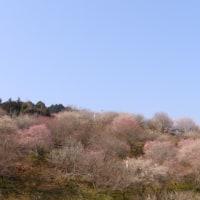 梅の里公園梅まつり
