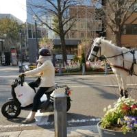横浜観光ルートに迷い込む!