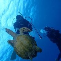 お久しぶりね。沖縄ダイビング 那覇シーマリン