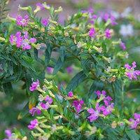 植物園(温室の花)