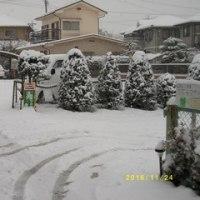 本日の雪の状況