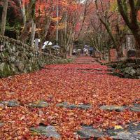 ちょっと遅かった・・・湖北の鶏足寺で紅葉見物