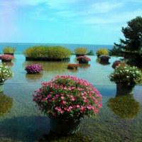 ひたち海浜公園 秋の風景