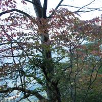 道後湯の町秋点描 湯の町暮らしに名峰皿ガ嶺の秋を訪ねて