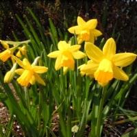 春らしい日曜日でしたネ♪ (∩˃o˂∩)♡
