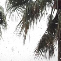 11月の初雪中
