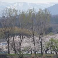 20170413 豪雪の白山山系~加越国境を展望する〔▲大倉岳〕を周回