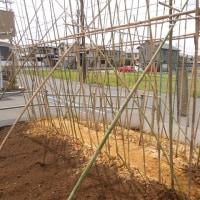 ナガイモ筒栽培           支柱完成