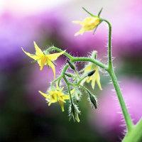 ~ 野菜の花 ~