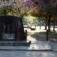 奈良公園の早朝風景