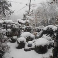 またまたドカ雪