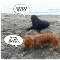 思い出の三浦海岸