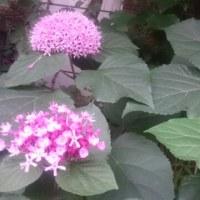 近所のお花と初じゃらし。