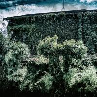 【Aug_17】裂開する緑_OVERGROWTH#10