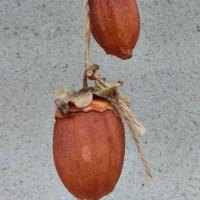 干し柿(写真)
