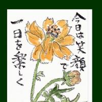 黄花コスモス(絵手紙)