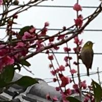野鳥観察の季節です!