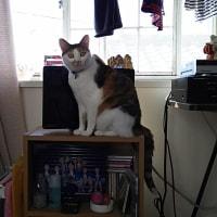 我が家の同居猫🐱