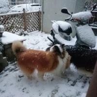 大雪のセンター試験2日目