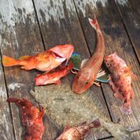 5月28日リベンジ志摩沖ジギングスーパーライトジギング‼️釣り仲間大募集中‼️