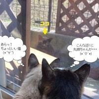 猫の大三角形△