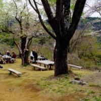 高尾山の花/ タカオスミレ ミツバツツジ 等 咲いています。   2017-04-19