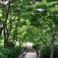 霞ケ浦総合公園 園内の様子