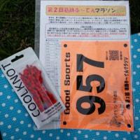 第2回 葛飾ふ~てんマラソンに参加