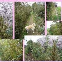 竹の花と最近の散歩風景
