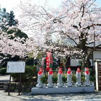 宝寿院のしだれ桜
